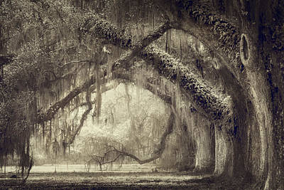 Live Oaks Photograph - Oak Avenue by Magda Bognar