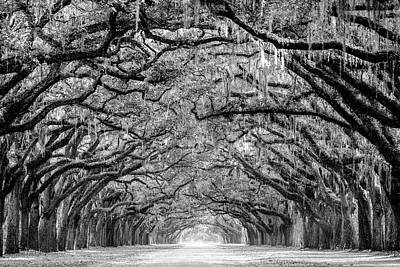 Photograph - Oak Avenue by Serge Skiba