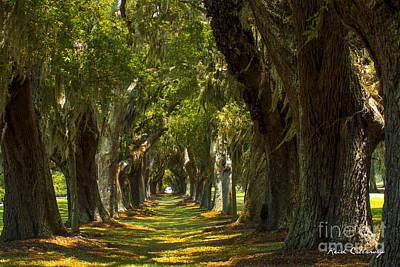 Photograph - Oak Avenue St Simons Island Georgia by Reid Callaway