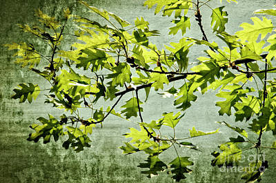 Photograph - Oak Branch Leaves by Jim And Emily Bush