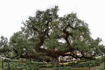 Photograph - Oak by Cecil Fuselier