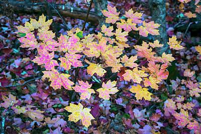 Photograph - Oak Creek Canyon Fall Colors by Dave Dilli