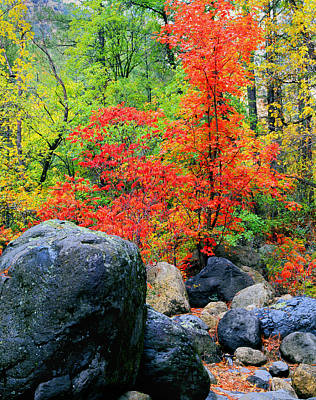 Photograph - Oak Creek Canyon Red by Frank Houck