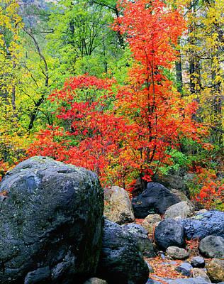 Photograph - Oak Creek Canyon Red by Frank Houck