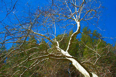 Photograph - Oak Creek Tree by Bonnie Follett