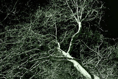 Photograph - Oak Creek Tree Monochrome by Bonnie Follett