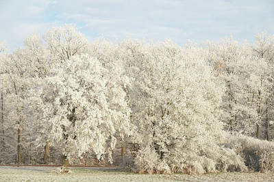 Photograph - Oak Forest In Hoar Frost Winter Landscape by Martin Stankewitz