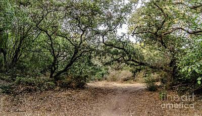 Photograph - Oak Forest Trail by Arik Baltinester