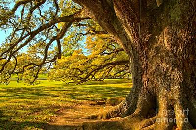 Photograph - Oak Giants Over The Plantation by Adam Jewell