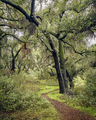 Photograph - Oak Grove Trail by Alexander Kunz