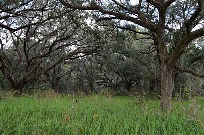 Photograph - Oak Grove by Warren Thompson