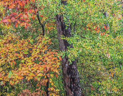 Oak Hickory Woodland Art Print by Tim Fitzharris