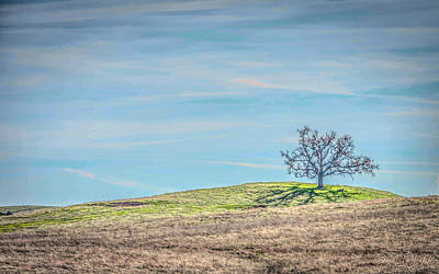 Photograph - Oak Hill by Steph Gabler