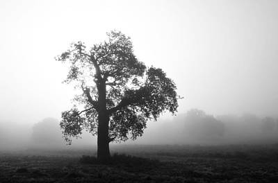 Photograph - Oak In Fog Monochrome by Marek Stepan