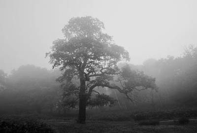Photograph - Oak In Mist by Marek Stepan