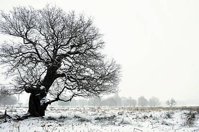 Photograph - Oak In Winter by Marek Stepan
