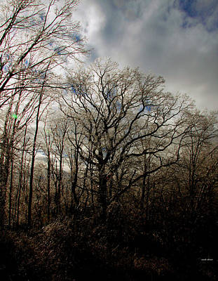 Photograph - Oak In Winter by Mark Alesse
