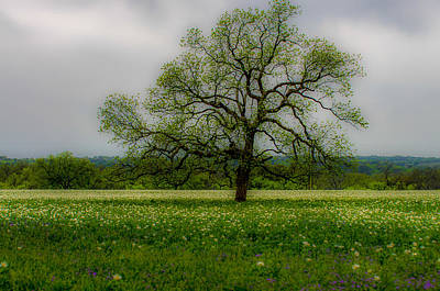Nature Photograph - Tree In The Meadow by Bob Marquis