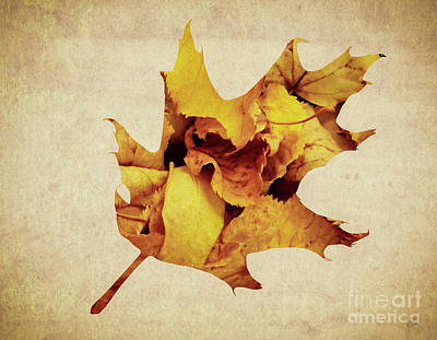 Photograph - Oak Leaf by Andrea Anderegg