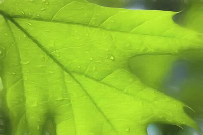 Photograph - Oak Leaf by Cindi Ressler