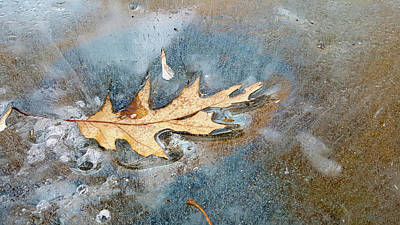 Photograph - Oak Leaf Frozen On Ice by Lynn Hansen