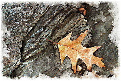 Digital Art - Oak Leaf On The Rocks by Peter J Sucy