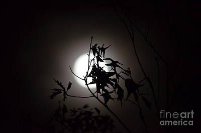Photograph - Oak Leaf Silhouettes by Maria Urso