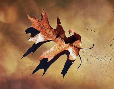 Photograph - Oak Leaf Study by Joe Duket