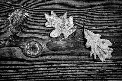 Photograph - Oak Leaves In Black And White by Debra and Dave Vanderlaan