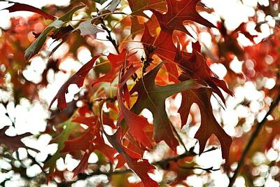 On Trend At The Pool - Oak Leaves In The Breeze by Gaby Ethington