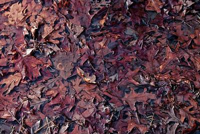 Photograph - Oak Leaves Steeping by Photography by Tiwago