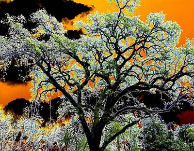 Napa Digital Art - Oak Oasis by Will Borden