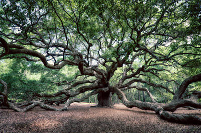 Charleston Photograph - Oak Of The Angels by Renee Sullivan