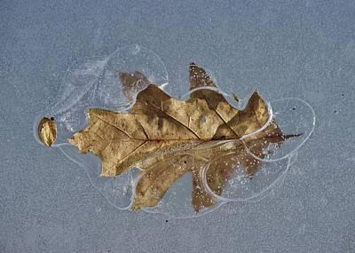 Photograph - Oak On Ice by David Pickett