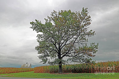 Oak On The Edge Art Print by Steve Gass