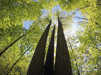 Photograph - Oak Ridges Moraine Forest by Charline Xia