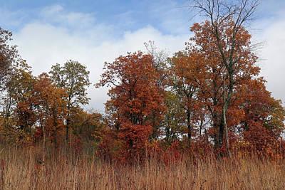 Photograph - Oak Savanna In Fall Colors by Scott Kingery