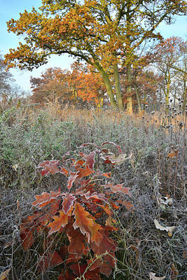 Photograph - Oak Savannah In Hackmatack National Wildlife Refuge by Ray Mathis