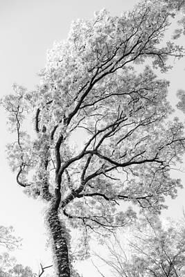 Photograph - Oak by Scott Rackers
