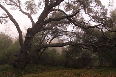 Photograph - Oak Sentinel With Coastal Fog by Robin Street-Morris