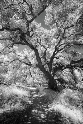 Photograph - Oak Shaded Trail by Alexander Kunz