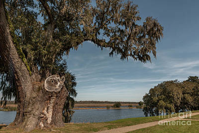 Photograph - Oak Side Of Middleton Place by Dale Powell