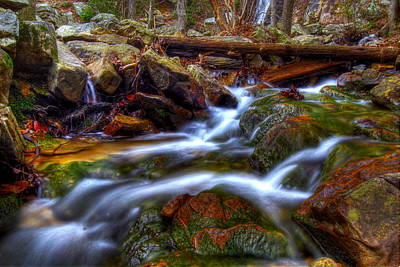 Photograph - Oak Stream by Christopher Lugenbeal