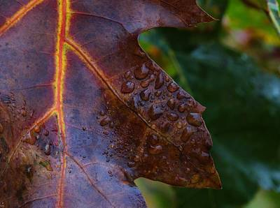 Photograph - Oak Tears by J L Zarek