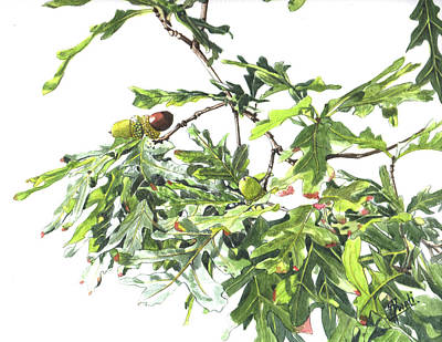 Painting - Oak Tree And Acorns by Swati Singh