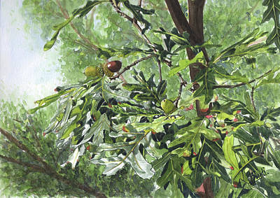 Painting - Oak tree and acorns with background by Swati Singh