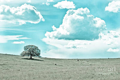 Photograph - Oak Tree And Clouds  by Jim And Emily Bush