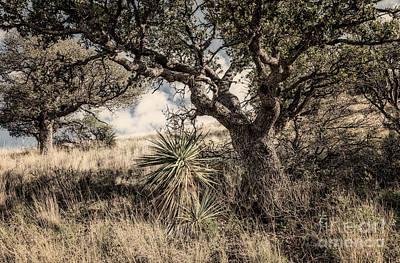 Rock Royalty - Oak Tree And Yucca On Hillside Toned by Al Andersen