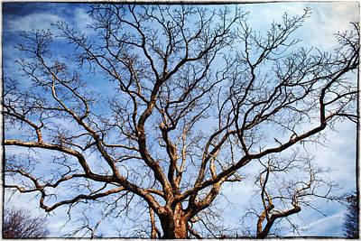 Little Mosters - Oak Tree by Skip Nall