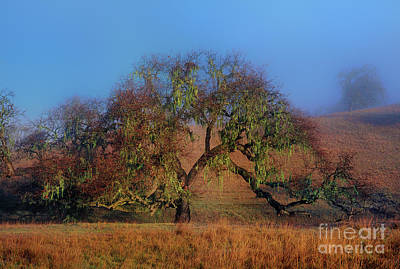 Photograph - Oak Tree Fog Lake Cachuma California by Dave Welling